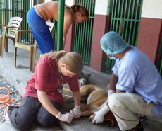 Swedish volunteers Aurelie & Ylva assisting Dr Surendra