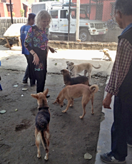 HART co-founder, Barbara Webb, at the Bharatpur kennels