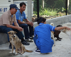 Despite the fuel and supplies shortages, the Bharatpur clinic remains open and is busy with un-neutered dogs
