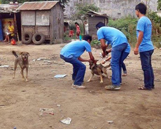 Dog catching for anti-rabies vaccination in Bharatpur