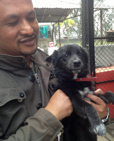 Blacky, the abandoned pup featured in the November newsletter, has recovered from his skin problems and is pictured here with Roshan Piya, his new owner