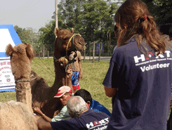 Camel treatment