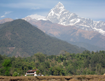 The cattle sanctuary is located in the foothills below Mt Machapuchare (6993m)