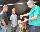 Local vet tech and organiser, Sankhu Shrestha (L), and UK vet, Dr Steve Lewis (R) discuss treatment