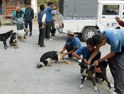 Dog catching in Dolakha