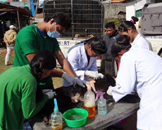 HART staff were assisted by local vet technicians