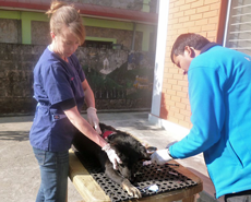 Volunteer vet, Dr Elenor Walsh, with HART technician Narayan Dhakal