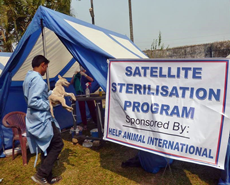 Help Animals International kindly contributed to the cost of the eastern camps