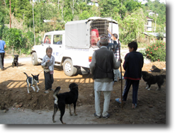 Villagers bringing their dogs to our collecting point