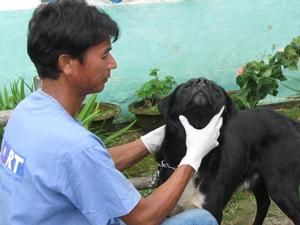 Dog handler Nem Shrestha
