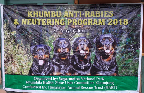 A quartet of Tibetan Mastiffs on the Khumbu programme banner