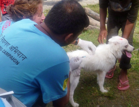 Anti-rabies vaccination in Lekhnath