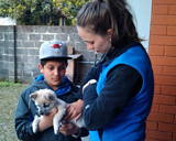 Dr Minia Coiacetto examines a young pup