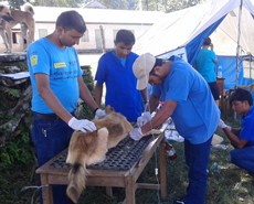 Dogs Trust have generously supported our work in the new, outlying, wards of Pokhara