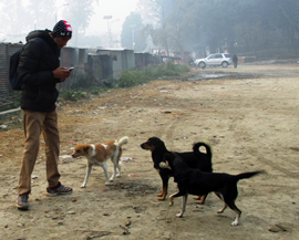 Some dogs were easier to count than others! GP Dahal recording their details into our smart-phone dog census app