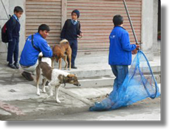 Using the net to catch dogs for anti-rabies vaccination