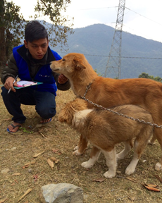 Saroj checking over a mum and pup during a vaccination camp in Pokhara Lekhnath Ward 22
