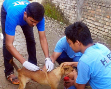 Anti-rabies vaccination on the streets of Sauraha