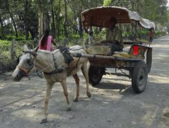 Tonga cart
